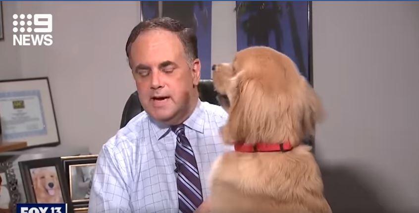 كلب يقطع بث تلفزيونى لصحابة المذيع وخبير الأرصاد الجوية (2)