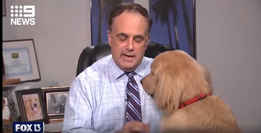 كلب يقطع بث تلفزيونى لصحابة المذيع وخبير الأرصاد الجوية (1)