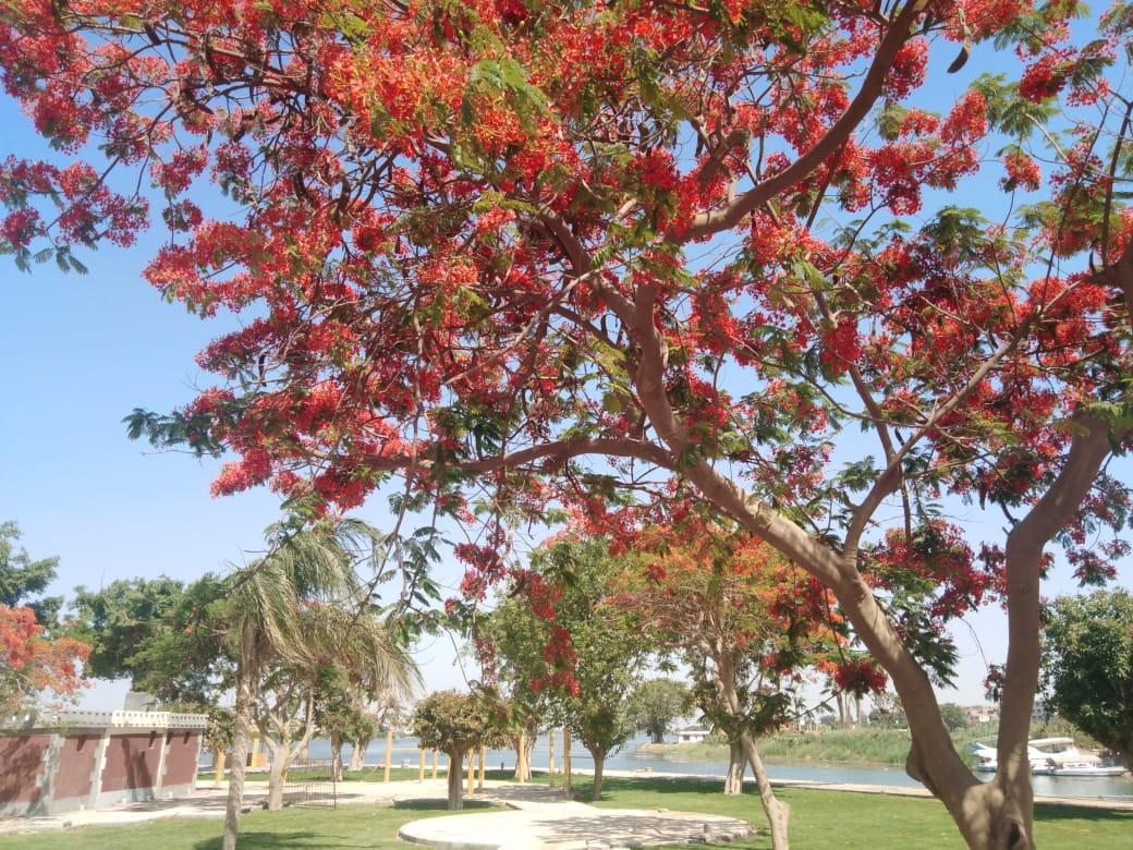 الأشجار النادرة بحدائق القناطر