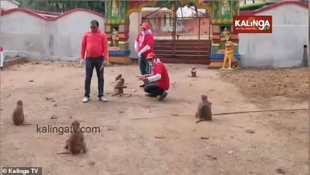القرود فى الهند  (3)