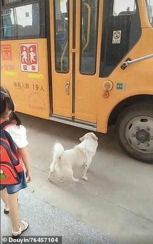 الكلبة مع صديقتها (1)