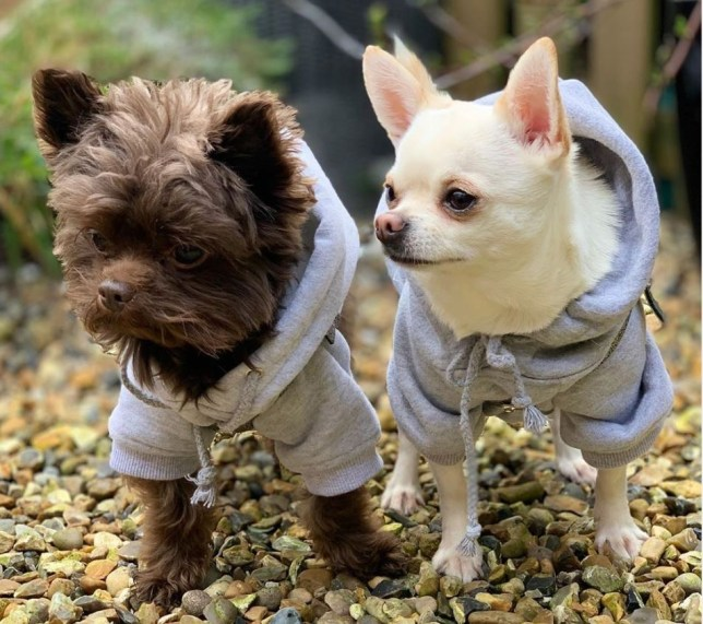 romeo-and-reggie-in-matching-grey-hoodies-af10