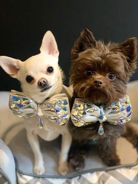 romeo-and-reggie-in-their-bow-ties-c81d