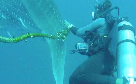 35517-القرش-الحوتى