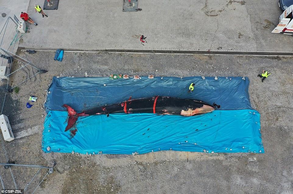 الحوت 2