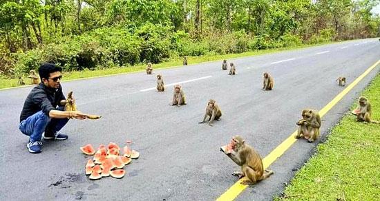 74876-القرود-فى-الهند--(1)