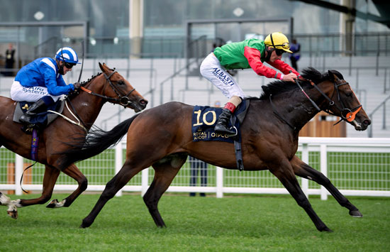 جانب من منافسات سباق الخيول البريطانى  رويال أسكوت
