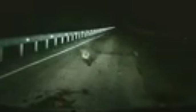 الدب الصغير يعبر الطريق
