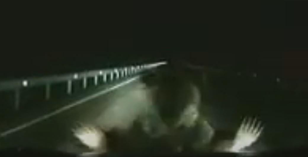 الدب يصطدم بالسيارة لحماية ابنه