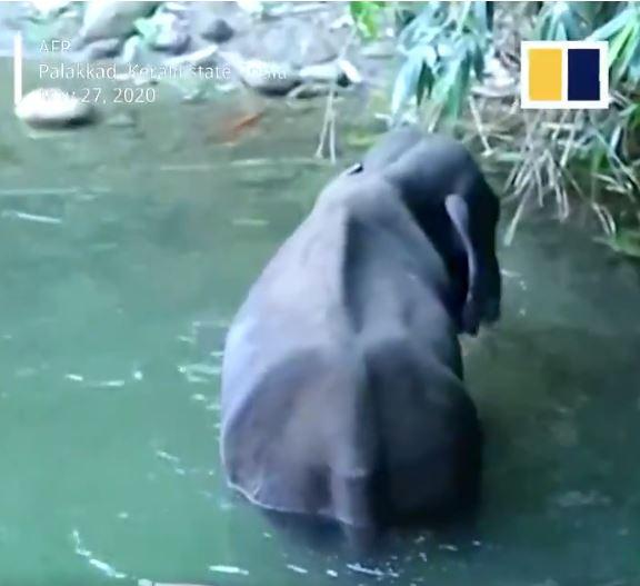 فيل بالهند
