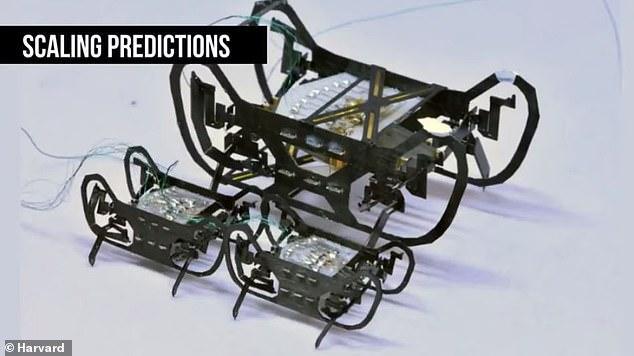 روبوت الصرصار 1