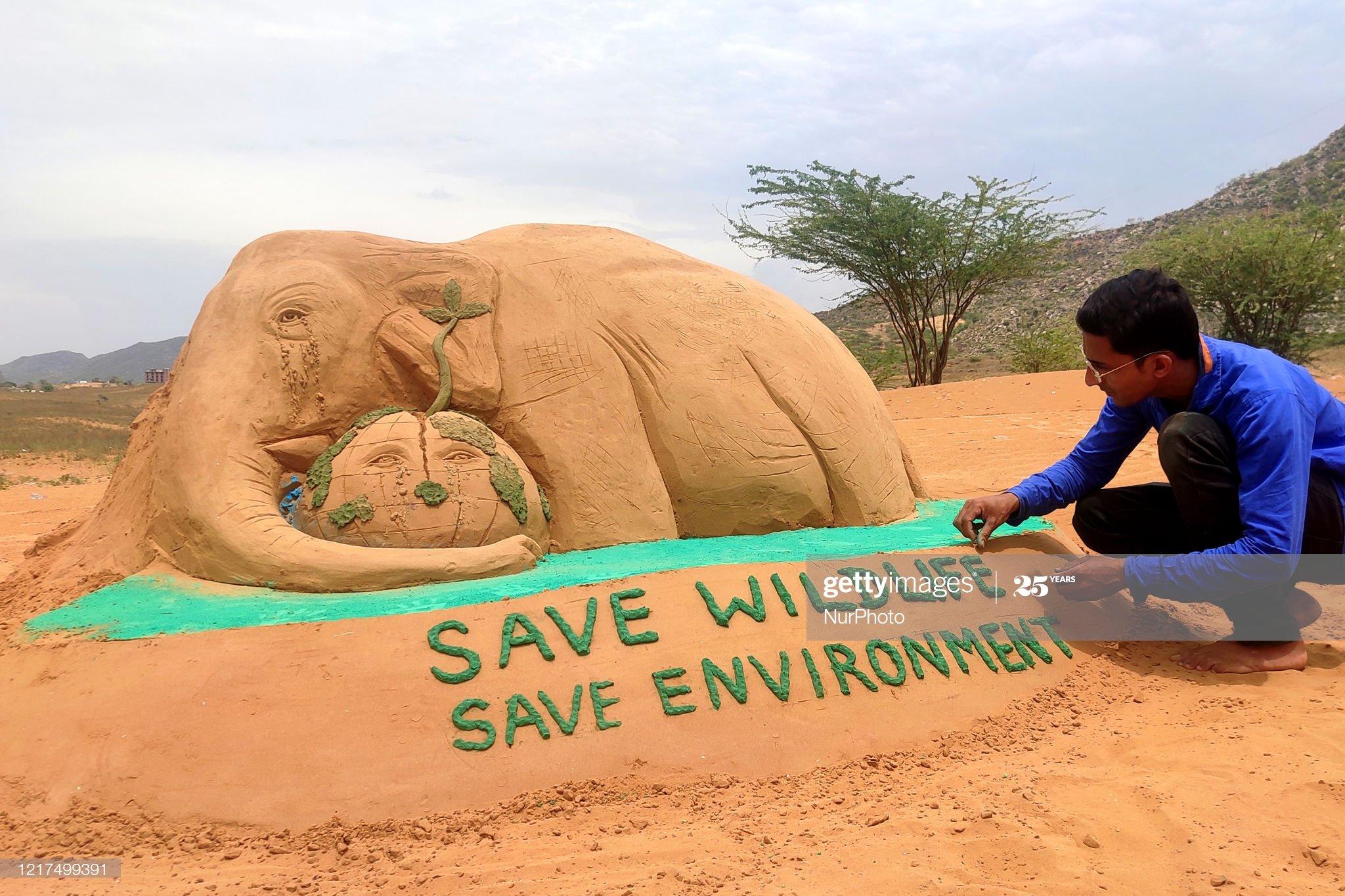 رسام هندي يرسم الفيل من الرمال