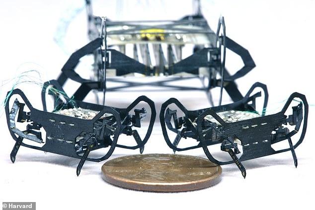 روبوت الصرصار رئيسية