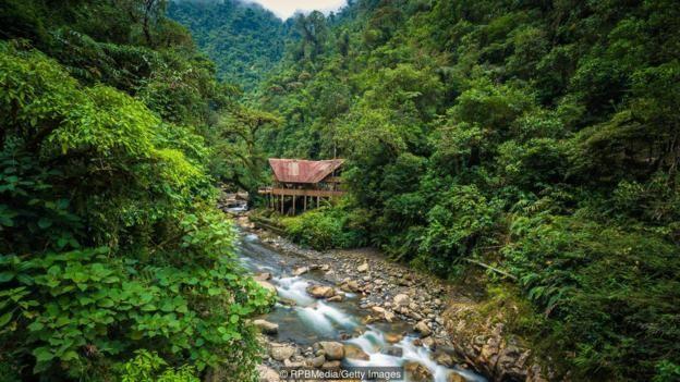 غابات بيرو