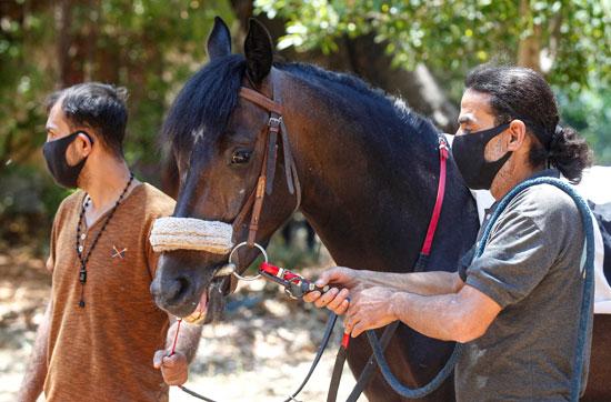يروضان الحصان