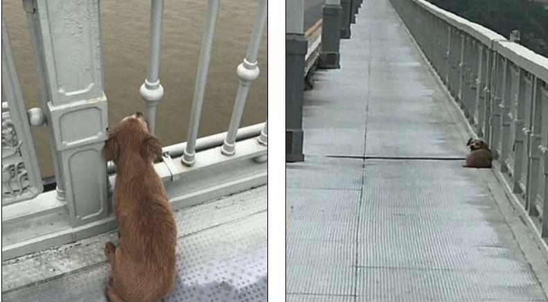 كلب ينتظر صاحبه بعد انتحاره