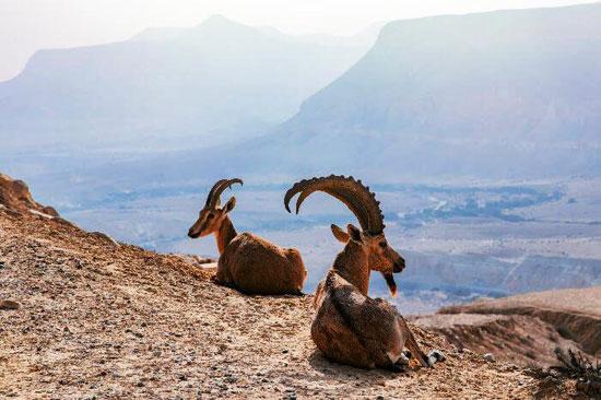 6202030163857832-Cover-Wildlife-In-Egyptepb0310