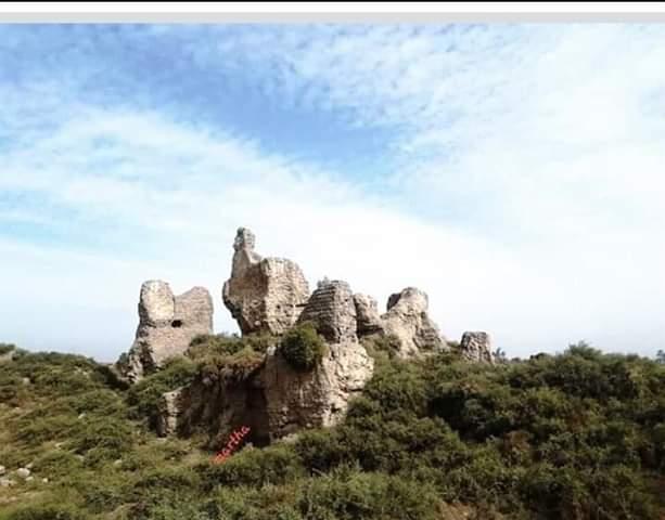 تونا الجبل (4)