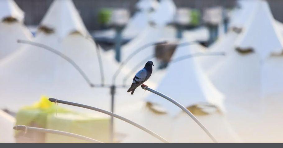الطيور فى الحرم المكى