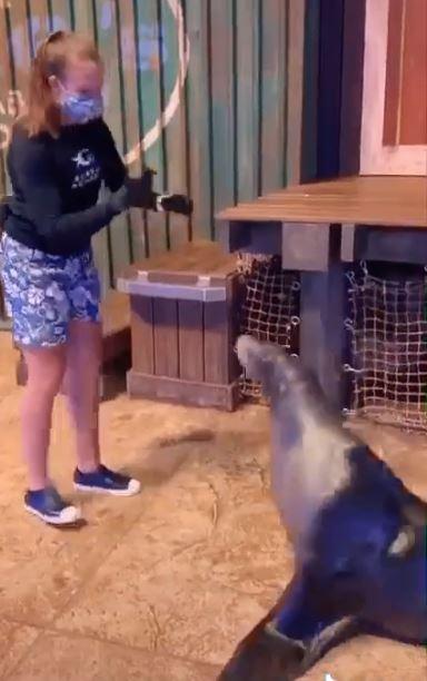 أسد البحر (4)