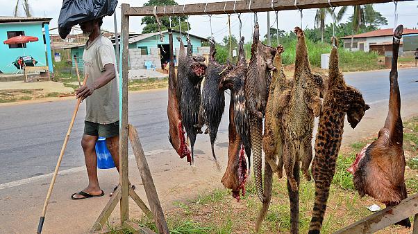 بيع الحيوانات البرية