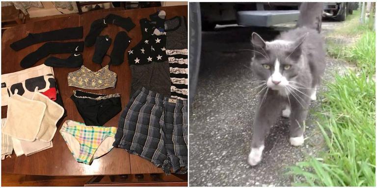 133-014320-cat-stealing-laundry-socks-neighbors-2