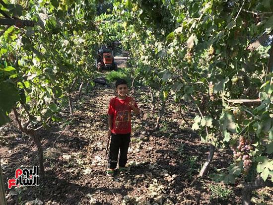 مزارعي العنب في الغربية