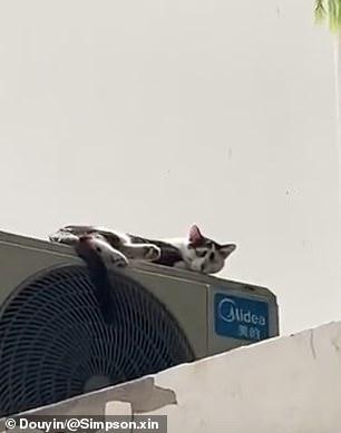 القط الصينى الحزين (3)