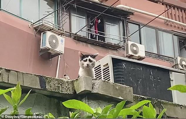 القط الصينى الحزين (1)
