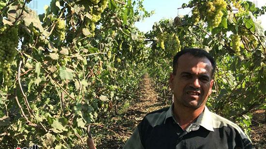 مزارعي العنب في الغربية (2)