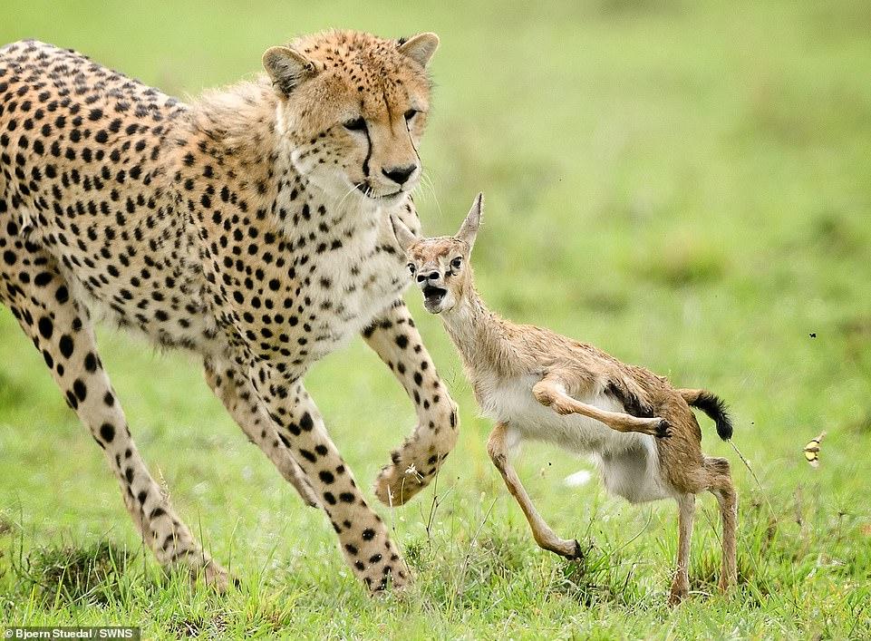 لقطات الحيوانات تفوز بالجائزة الأولى