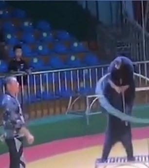 فصل مدرب بحديقة حيوانات صينية لدسه دب بإبرة لإجباره على أداء الحركات (2)