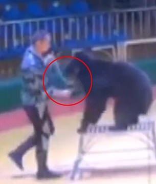 فصل مدرب بحديقة حيوانات صينية لدسه دب بإبرة لإجباره على أداء الحركات (1)