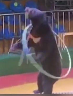 فصل مدرب بحديقة حيوانات صينية لدسه دب بإبرة لإجباره على أداء الحركات (3)