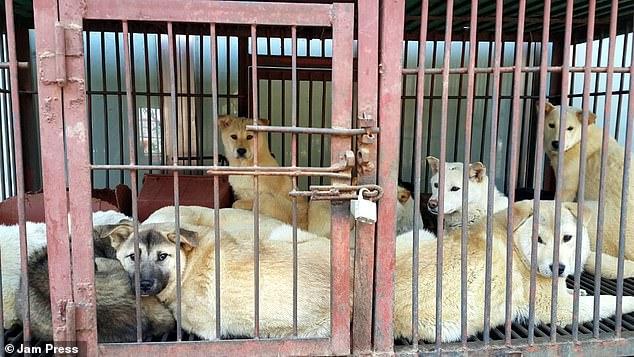 مجموعة من الكلاب