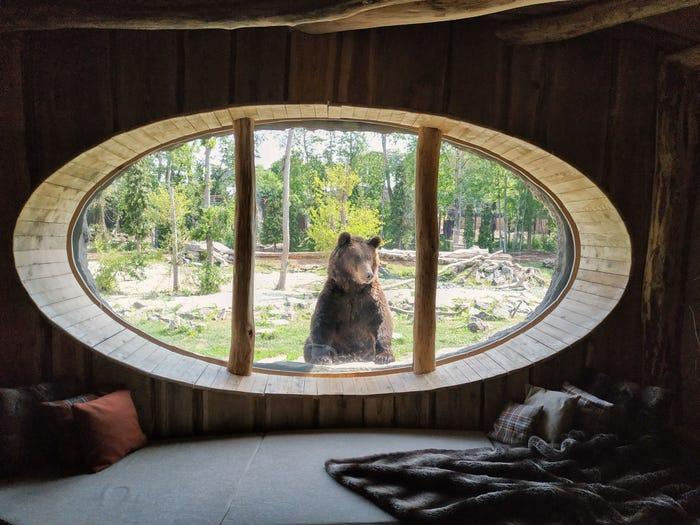 فندق داخل حديقة الحيوانات البلجيكية..