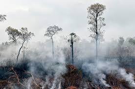 حرائق فى غابات الامازون