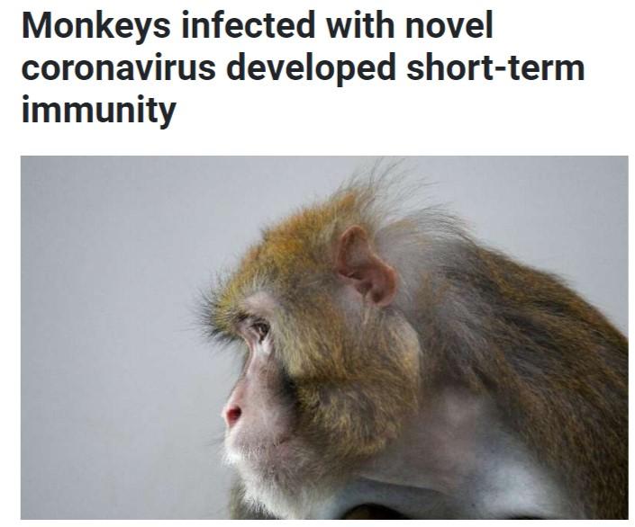اصابة القرود بمناعة ضعيفة