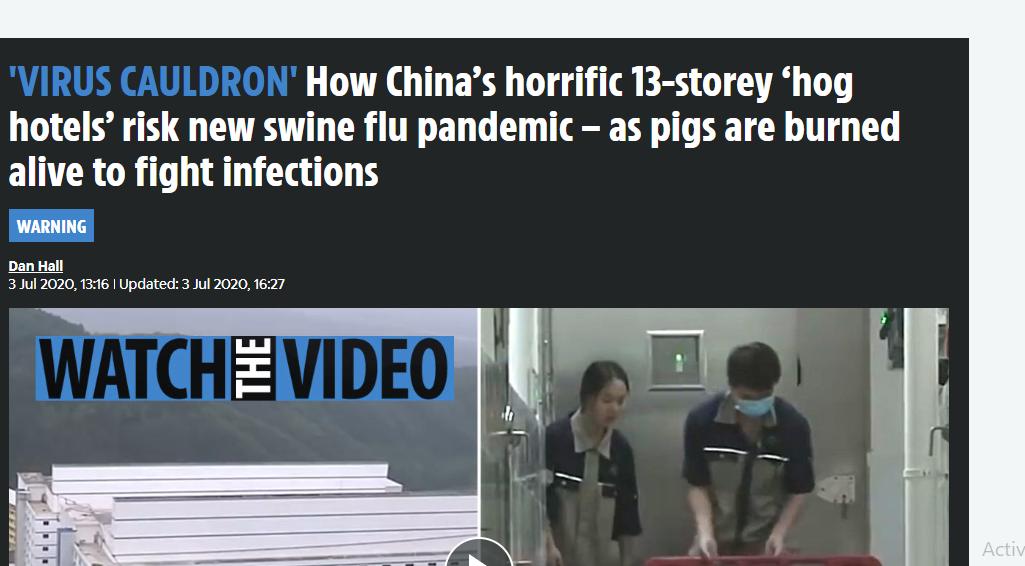 ملايين الخنازير يتم حرقها فى الصين