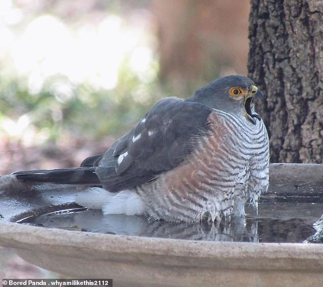 مواقف مضحكة للطيور (9)