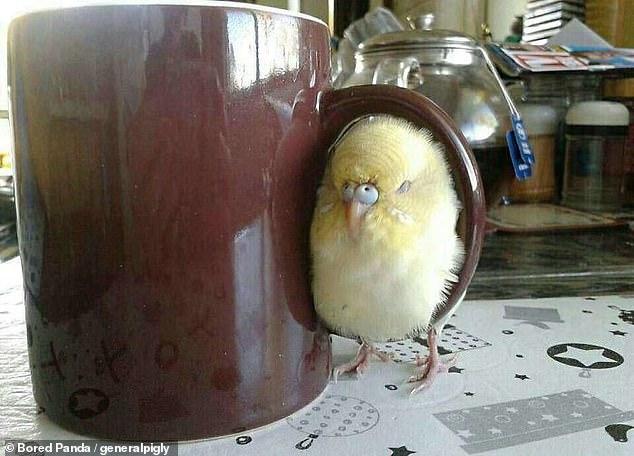 مواقف مضحكة للطيور (4)