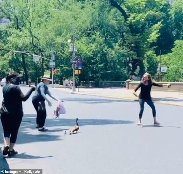 مرور البط فى شوارع نيويورك (2)