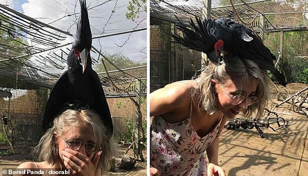 مواقف مضحكة للطيور (2)