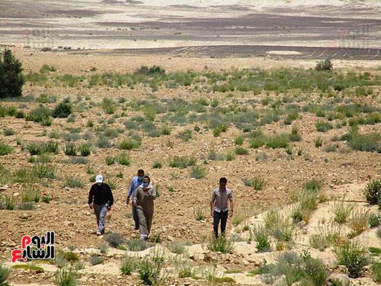سيناء (6)