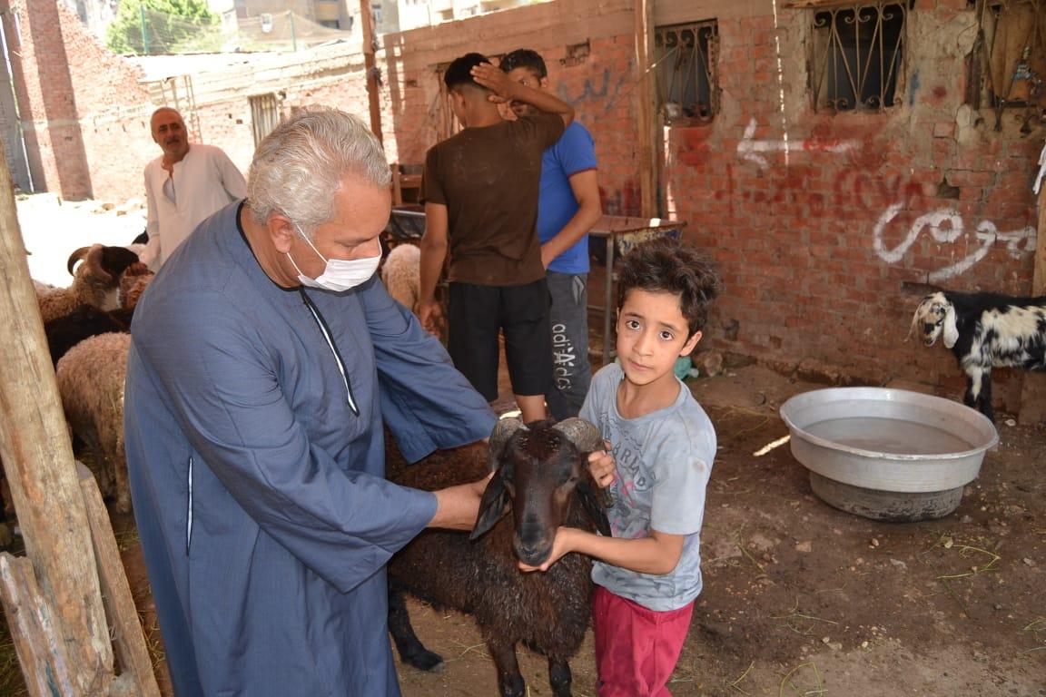 نقيب الفلاحين واسعار الماشية  (3)