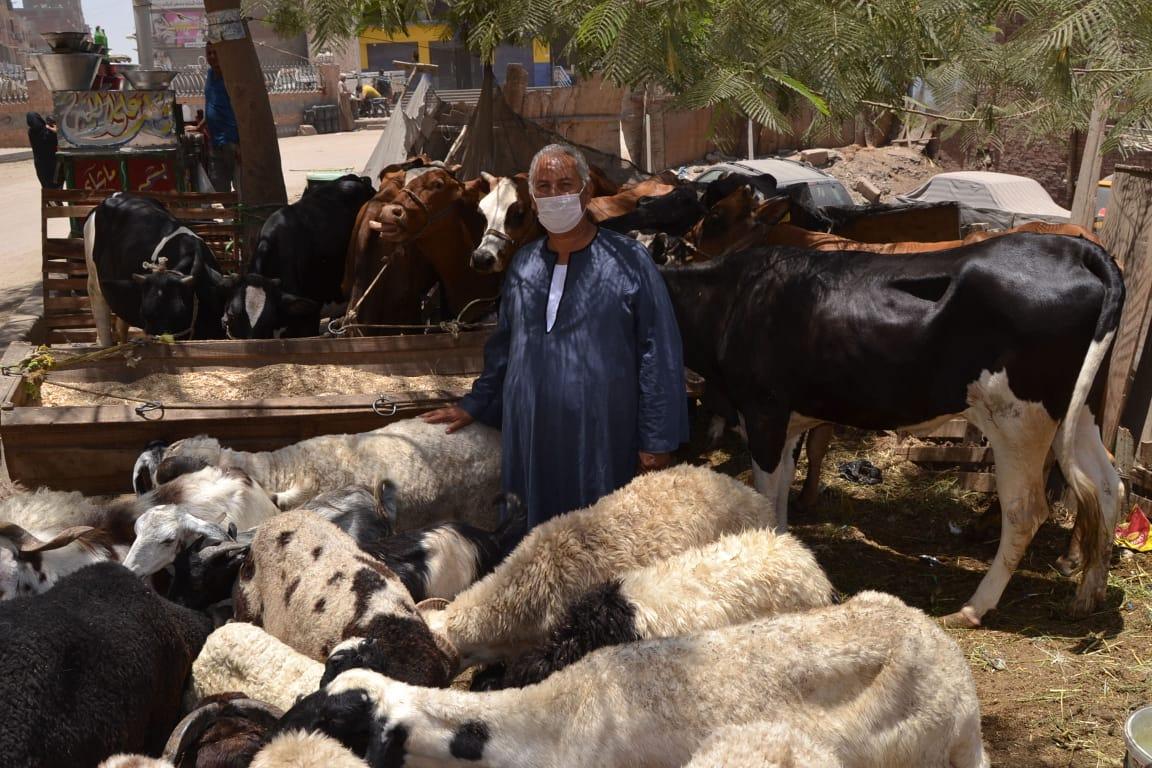 نقيب الفلاحين واسعار الماشية  (4)