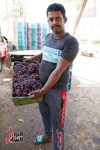 العنب بعدالجمع