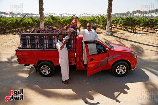 عربيات نقل المحصول
