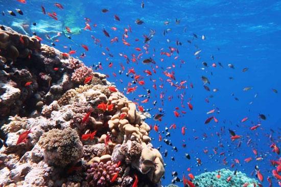 شواطئ وفنادق مرسى علم تستعد لاستقبال السياحة الأوروبية (14)