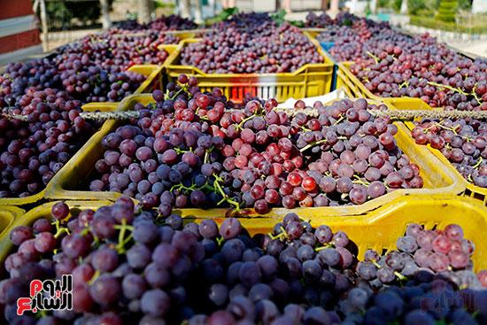 جمع العنب على السيارات